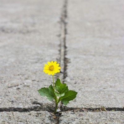 Plant growing resilience